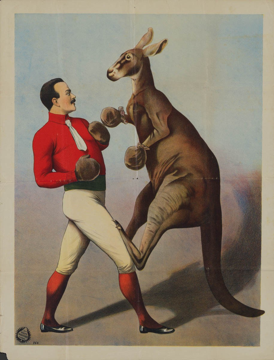 24-kangaroo-boxing-german-a1-1890s-01